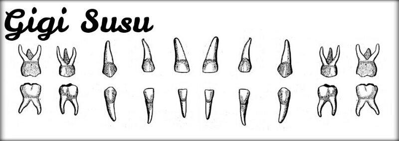 DHE: Macam, Jumlah, Waktu Tumbuh dan Tanggal Gigi (2/6)