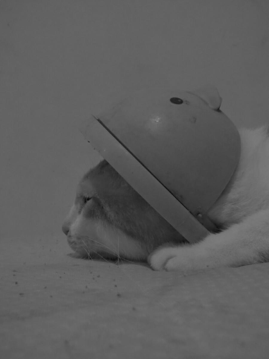 tuki-cute~01.jpg